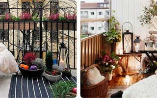Садовые растения на открытом балконе зимой: миссия выполнима