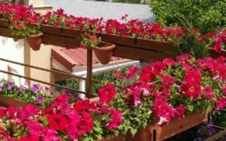 Цветы для выращивания на балконе